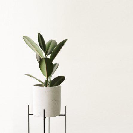 Саксийни растения